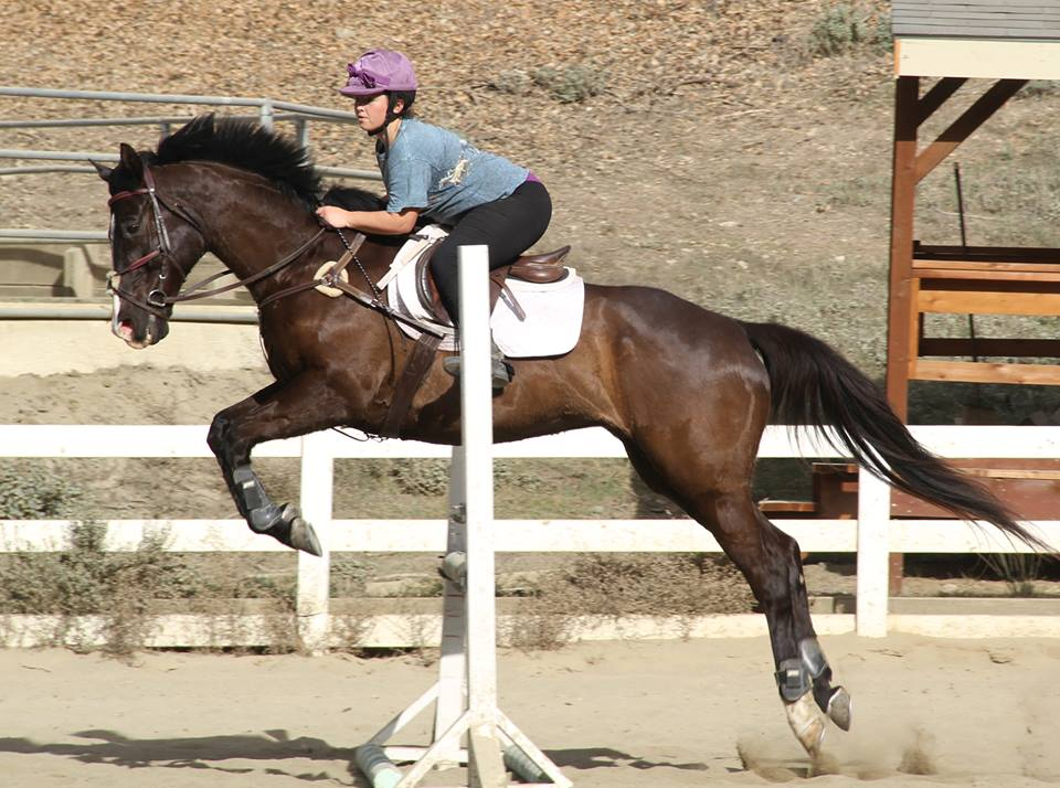 eventing_photo_55